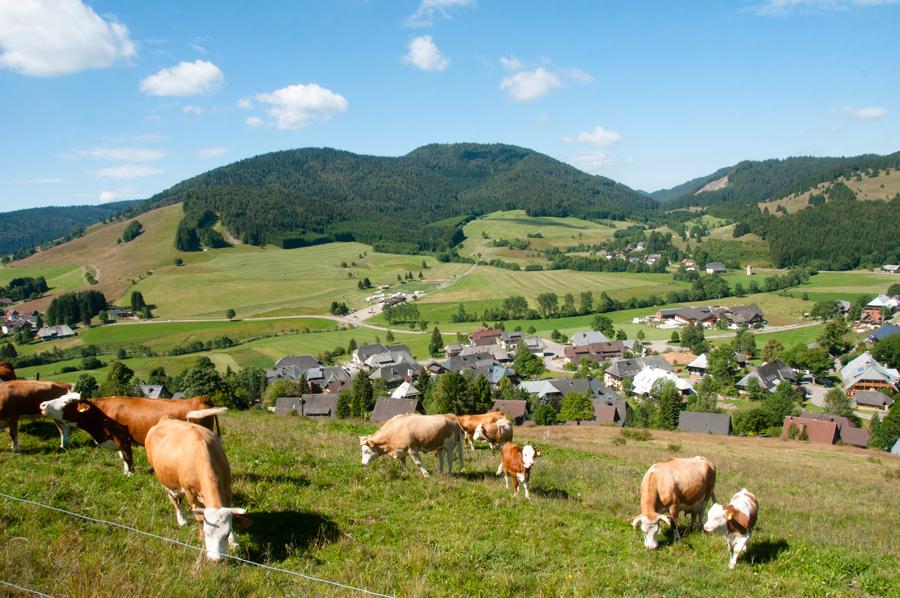 Schwarzwald-Idylle mit Blick auf Bernau