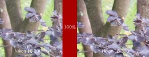 Links: NIKKOR 18-200 mm @200mm; Rechts: NIKKOR 18-300 mm @200mm