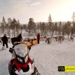 In der Wildnis: Rentierfütterung im Winter